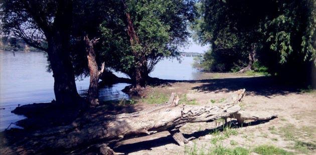 Leva obala Dunava