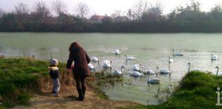 Borča labudovo jezero