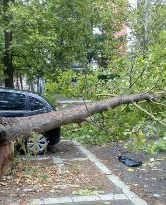 Drvo oboreno pod naletom vetra