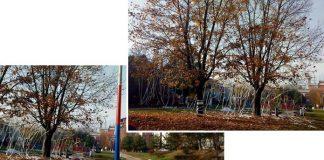 okićeno drvo