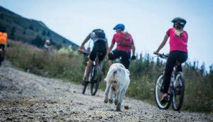Biciklistički maraton - Kopaonik