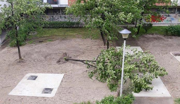 Košava oborila drvo u Borči